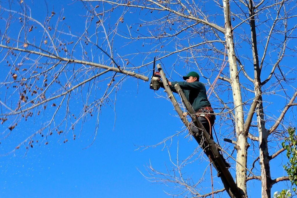 Contact Us-North Miami Beach FL Tree Trimming and Stump Grinding Services-We Offer Tree Trimming Services, Tree Removal, Tree Pruning, Tree Cutting, Residential and Commercial Tree Trimming Services, Storm Damage, Emergency Tree Removal, Land Clearing, Tree Companies, Tree Care Service, Stump Grinding, and we're the Best Tree Trimming Company Near You Guaranteed!