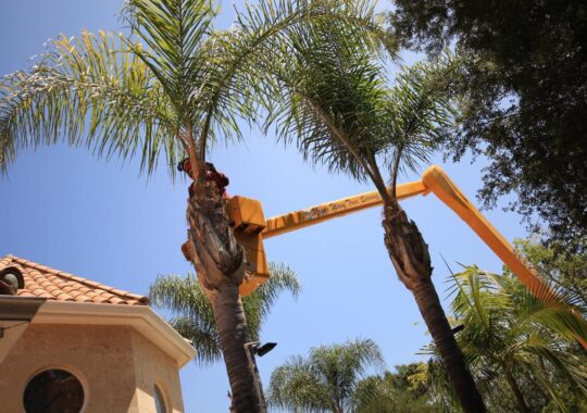 Palm Tree Trimming-North Miami Beach FL Tree Trimming and Stump Grinding Services-We Offer Tree Trimming Services, Tree Removal, Tree Pruning, Tree Cutting, Residential and Commercial Tree Trimming Services, Storm Damage, Emergency Tree Removal, Land Clearing, Tree Companies, Tree Care Service, Stump Grinding, and we're the Best Tree Trimming Company Near You Guaranteed!