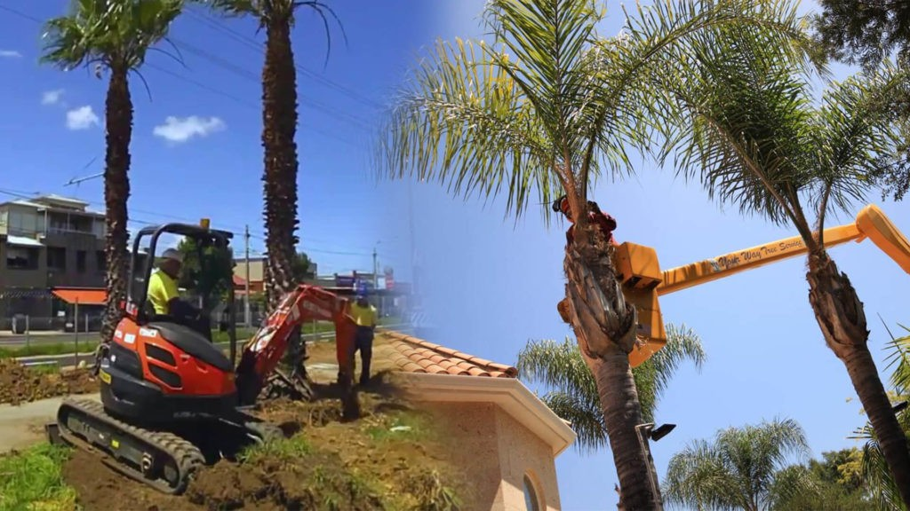 Palm tree trimming & palm tree removal-North Miami Beach FL Tree Trimming and Stump Grinding Services-We Offer Tree Trimming Services, Tree Removal, Tree Pruning, Tree Cutting, Residential and Commercial Tree Trimming Services, Storm Damage, Emergency Tree Removal, Land Clearing, Tree Companies, Tree Care Service, Stump Grinding, and we're the Best Tree Trimming Company Near You Guaranteed!