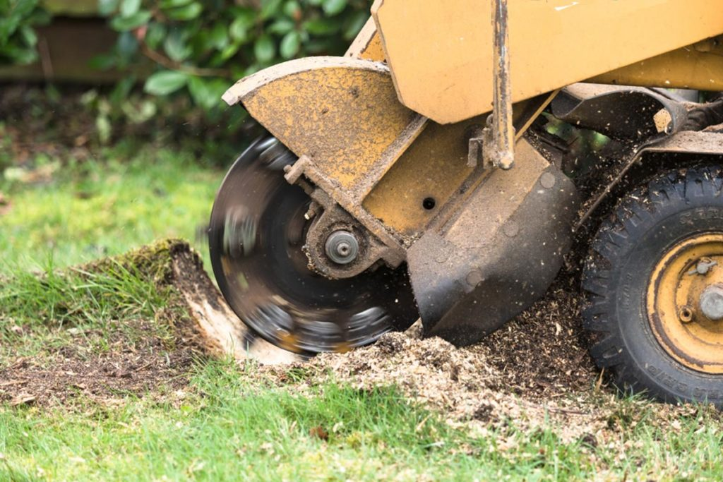 Stump Grinding-North Miami Beach FL Tree Trimming and Stump Grinding Services-We Offer Tree Trimming Services, Tree Removal, Tree Pruning, Tree Cutting, Residential and Commercial Tree Trimming Services, Storm Damage, Emergency Tree Removal, Land Clearing, Tree Companies, Tree Care Service, Stump Grinding, and we're the Best Tree Trimming Company Near You Guaranteed!