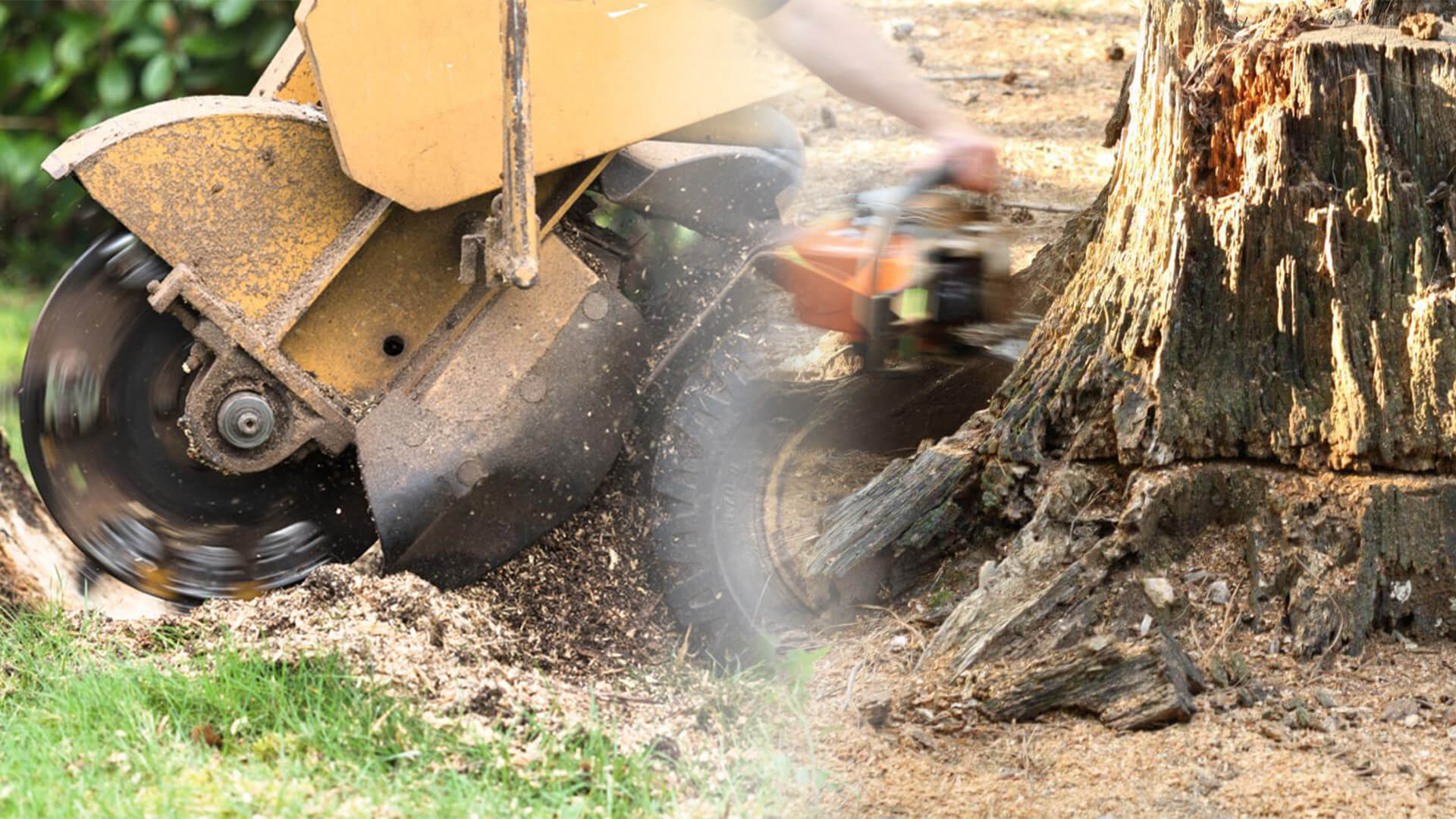 Stump grinding & removal-North Miami Beach FL Tree Trimming and Stump Grinding Services-We Offer Tree Trimming Services, Tree Removal, Tree Pruning, Tree Cutting, Residential and Commercial Tree Trimming Services, Storm Damage, Emergency Tree Removal, Land Clearing, Tree Companies, Tree Care Service, Stump Grinding, and we're the Best Tree Trimming Company Near You Guaranteed!