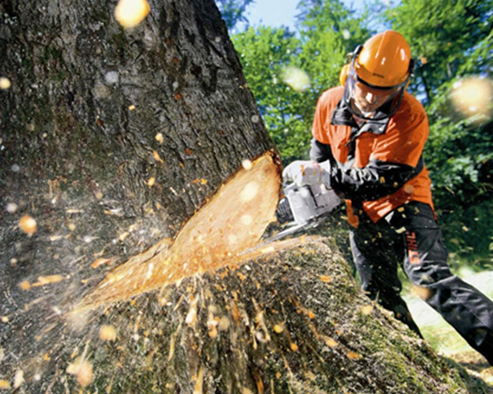 Tree Cutting-North Miami Beach FL Tree Trimming and Stump Grinding Services-We Offer Tree Trimming Services, Tree Removal, Tree Pruning, Tree Cutting, Residential and Commercial Tree Trimming Services, Storm Damage, Emergency Tree Removal, Land Clearing, Tree Companies, Tree Care Service, Stump Grinding, and we're the Best Tree Trimming Company Near You Guaranteed!